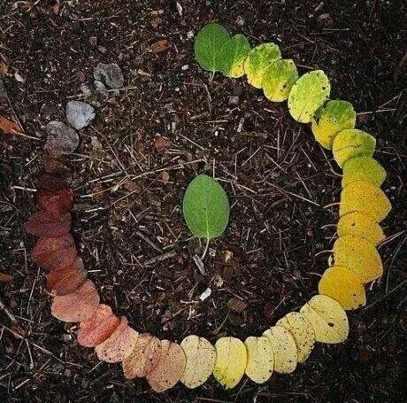 cuộc sống vô thường như chiếc lá