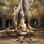 Ý Nghĩa Của Giác Ngộ Trong Phật Giáo
