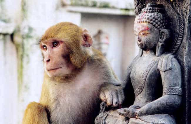 cách thuần hóa tâm trí khỉ