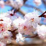 Nhạc Thiền Trung Hoa Nhẹ Nhàng Và Sâu Lắng