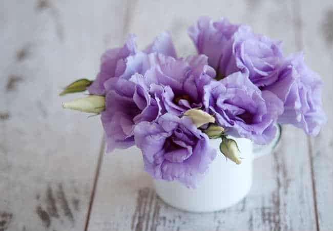 ý nghĩa của hoa hồng tím