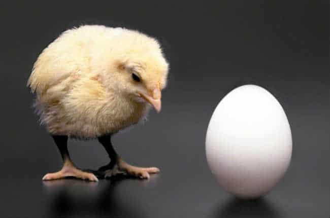 trứng có trước hay gà có trước theo góc nhìn khoa học