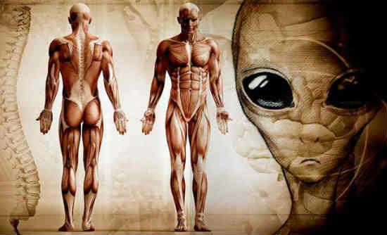con người đến từ đâu nguồn gốc của loài người