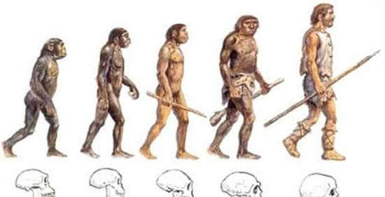 quá trình tiến hóa của loài người qua từng thời kỳ